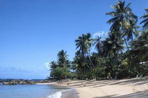Puerto Rico, Dorado, beach with palm trees